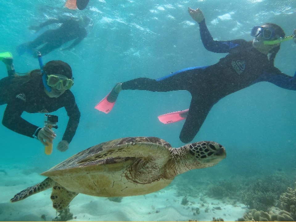 Australia students snorkelling